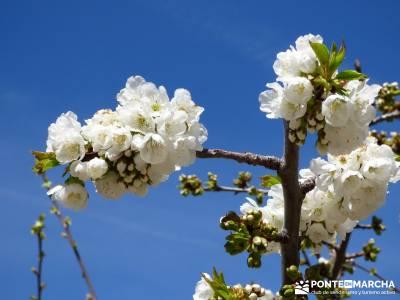 Cerezos en flor en el Valle del Jerte - excursiones y senderismo;rascafria viajar solo grazalema